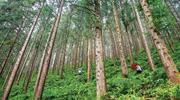 福建国有林场:回归生态本位,激活林场活力