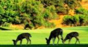 物种多样性与生产力研究进展