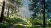 森林食品 守住原产地,就是守住健康!