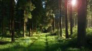 森林疗法:康养旅游中的自然良药