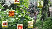 食物森林:可以吃的多样化生态系统