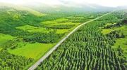 丰宁千松坝林场:20年增绿百万亩筑京津绿色屏障
